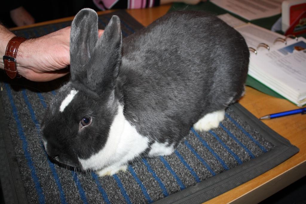 namen für kaninchen